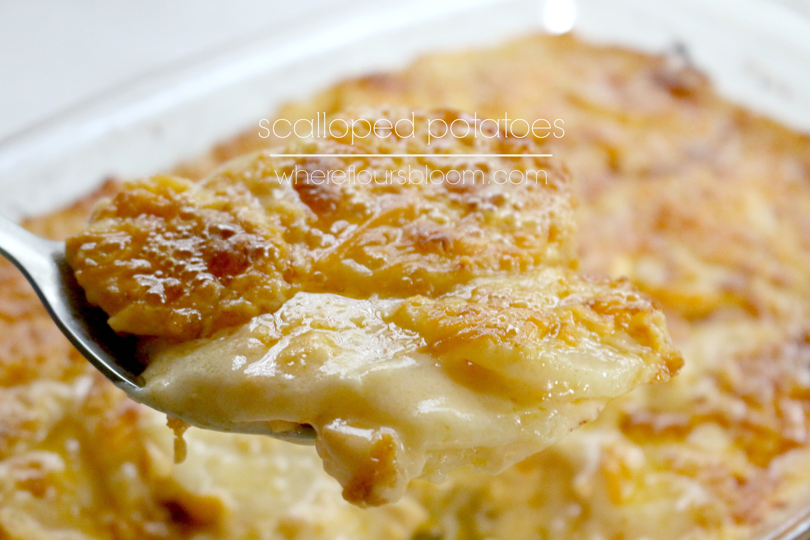ham scalloped potatoes gourmet scalloped potatoes scalloped potatoes ...